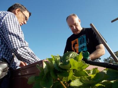 Horticultura-terapeutica